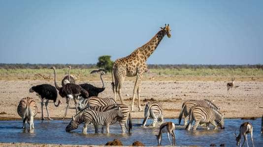 Tanzanie 2